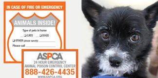 Free ASCPA Pet Safety Pack